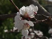 Fotos Naturaleza-p3210129.jpg