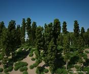 forest high poly FREE-tree-models-dp-studio-free.jpg