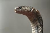 alguien tendra un tutorial de como modelar una Cobra -01-abril-2011-08-27-00-serpientes-cobra-27-10.2010-vietnam_detalle_media.jpg