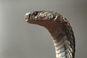 -01-abril-2011-08-27-00-serpientes-cobra-27-10.2010-vietnam_detalle_media.jpg