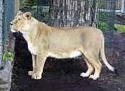 modelado de leona-leona_11.jpg