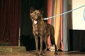 Modelado lobo-lobodelcoloradoco4.jpg