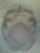 dibujos y bocetos-skull.jpg