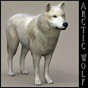 Lobo-arcticwolf02ridimension.jpg