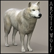 Lobo-arcticwolf02ridimension.jpg