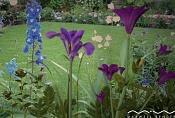 Maxwell  s flowers_mane162-garden5lw.jpg