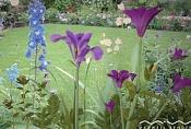 Maxwell  s flowers_mane162-garden5lwcorercted0sd.jpg