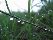 Macrofotografia-aigua01-012.jpg