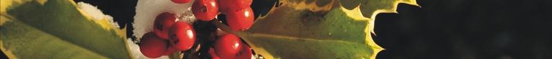 Felices Fiestas-felicitacion-foro3d.jpg