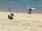 Fauna-palomas.jpg
