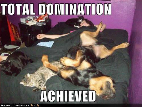 algunos misterios sin resolver-7d0d4_funny-dog-pictures-domination-achieved.jpg