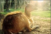 Fauna-calidez.jpg