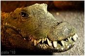 Fauna-crocodile2e.jpg