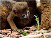 Fauna-dsc02480g.jpg