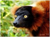 Fauna-dsc02521t.jpg