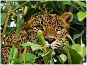 Fauna-dsc02140v.jpg