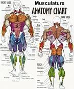 Florencio-anatomy2.jpg