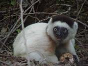 Un poco de ciencia-lemur_02s.jpg