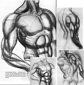 Men Musculoso   babon   -hograth9zi.jpg