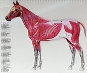 camello espacial   -horse1zf7.jpg