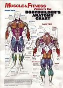 Supermansote-anatomychart.jpg