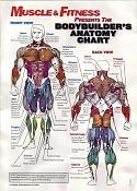 Supermansote-anatomychart.jpg