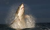 mar de tethis-shark-predator-picture_29a2390a-1024x631.jpg