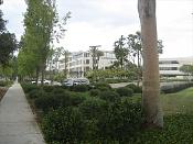 Hielo-bushes-add.jpg