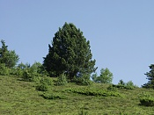 Fotos Naturaleza-p7170948.jpg