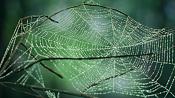 Cobwebs Script para crear telarañas-telaranas.png