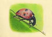 Escuela de arte ilustracion-ladybug.jpg