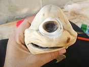 Un poco de ciencia-one-eyed-cyclops-shark-pup-holding-face_41775_600x450.jpg