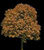 opacidad-arbre-tardor.jpg