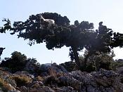 Fotos Naturaleza-como_una_cabra_2.jpg