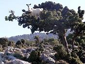 Fotos Naturaleza-como_una_cabra.jpg
