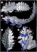 Insectos con 305 millones de años en 3D-insectos-con-305-millones-de-anos-en-3d.jpg