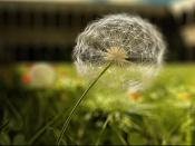 Monasterio Hi Resolution-dandelion.jpg