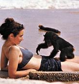PROJECT NIM - Sexo, drogas y un mono llamado Nim-na34fo01.jpg