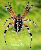 Trabajo en el recorte de esta foto de una araña tomada por mi -mi-aran-a.jpg