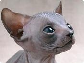 Como empezar en el dibujo -gatos-sphinx1.jpg