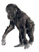 Chimpance-chimpance.jpg