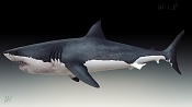 Great white shark and the seal - WIP-whiteshark_shaded_left_2.jpg