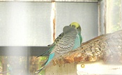 Fauna-img_1785.jpg