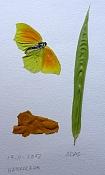 Ilustraciones de adal-natura.jpg