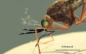 Mosquitos-anopheles_detalle.jpg