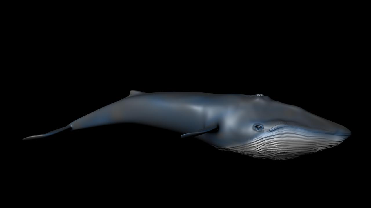 Maya] Modelado de una ballena