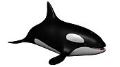 Orca-orca_1.png