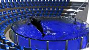 Orca-orca.png