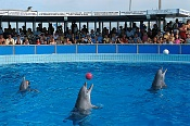 Orca-immaginidelfinariorimini_delfinario_4.jpg