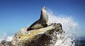Sealion Spirit-carlos_parmentier_sealion_splash.jpg